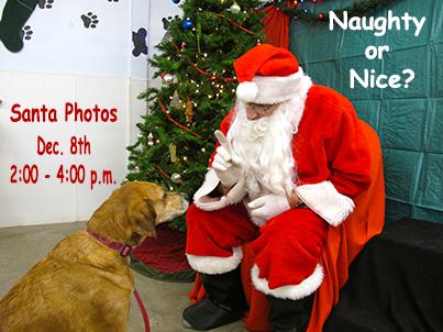Dog Santa Photos