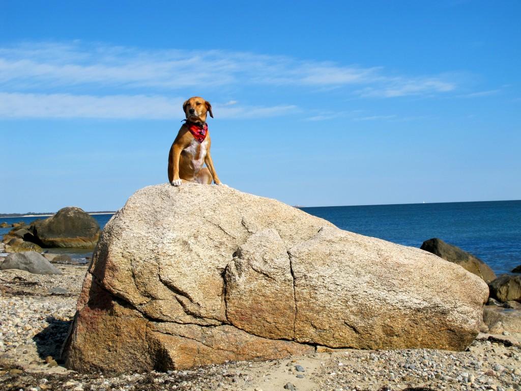 Gooseberry Island Westport Massachusetts