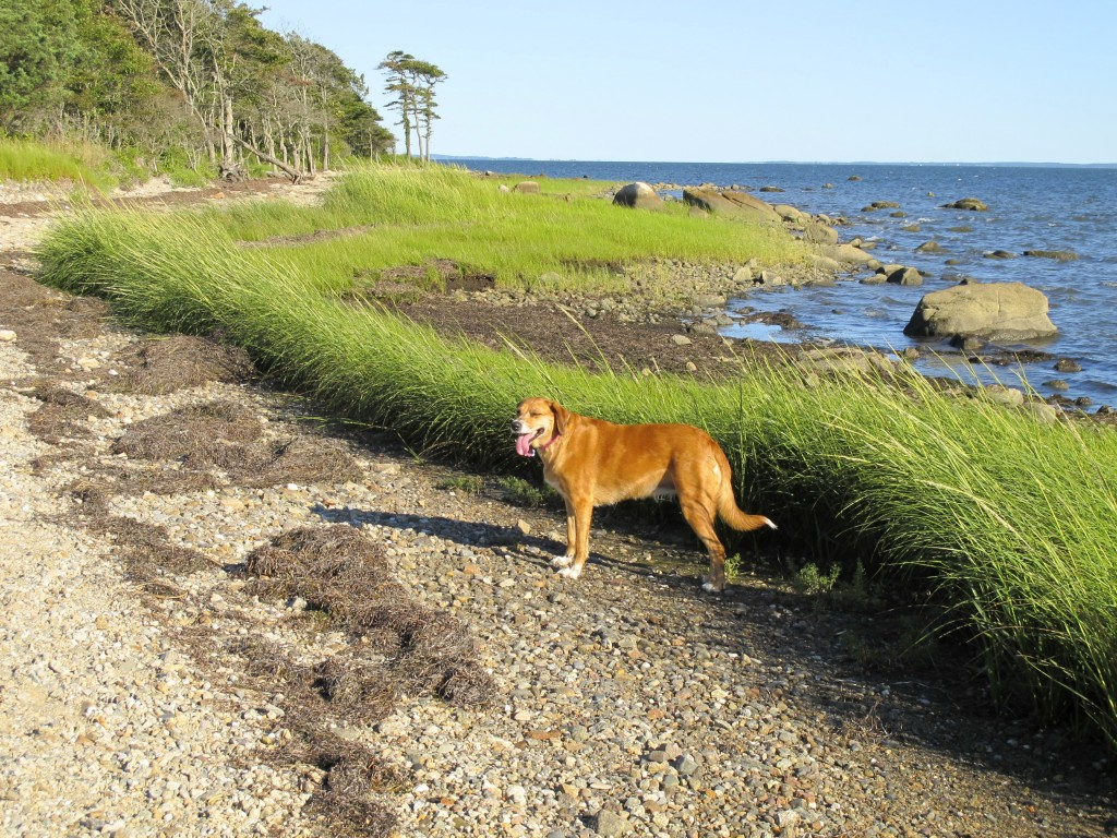 Nasketucket Bay State Reservation Pet Friendly