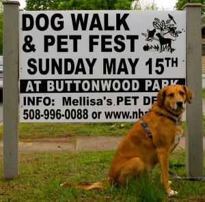 Pet Friendly Events