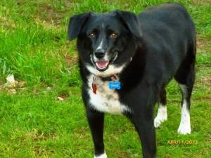 Senior Dog Older Dog