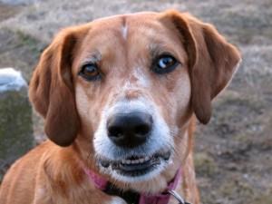 Pet Dental Health