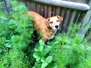 Dog Friendly Garden | Fairhaven Massachusetts